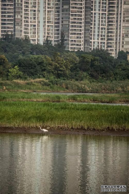 数万候鸟齐聚深圳 大美红树林!第一张图就美呆了