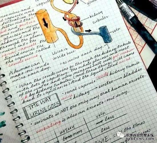 广西美女手抄笔记走红!长得漂亮写字又好看真的很迷人